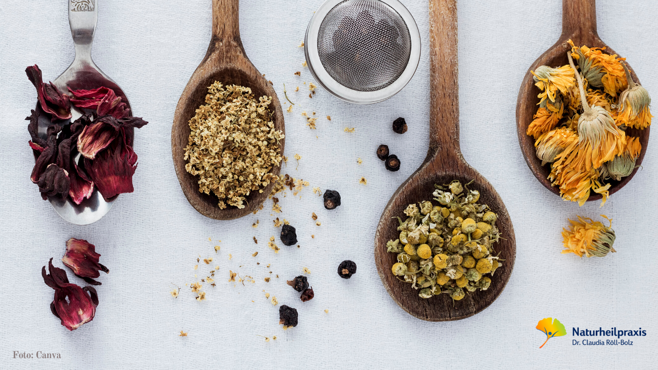 Tee selber machen - Immunsystem stärken - Heilpraktikerin Dr. Röll-Bolz in Karlsruhe