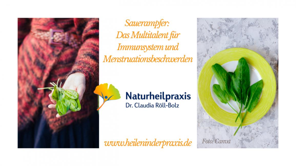 Sauerampfer: Das Multitalent für Immunsystem und Menstruationsbeschwerden