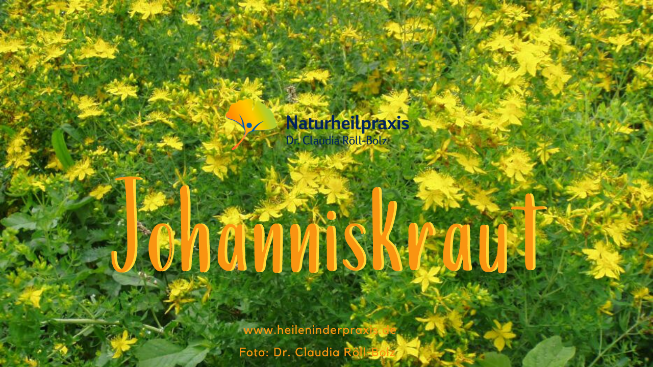Getüpfeltes Johanniskraut (Hypericum perforatum) – die strahlende Kraft der Sonne tanken