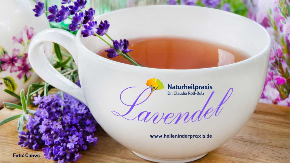 Arzneipflanze 2020: Wunderbar duftender Lavendel
