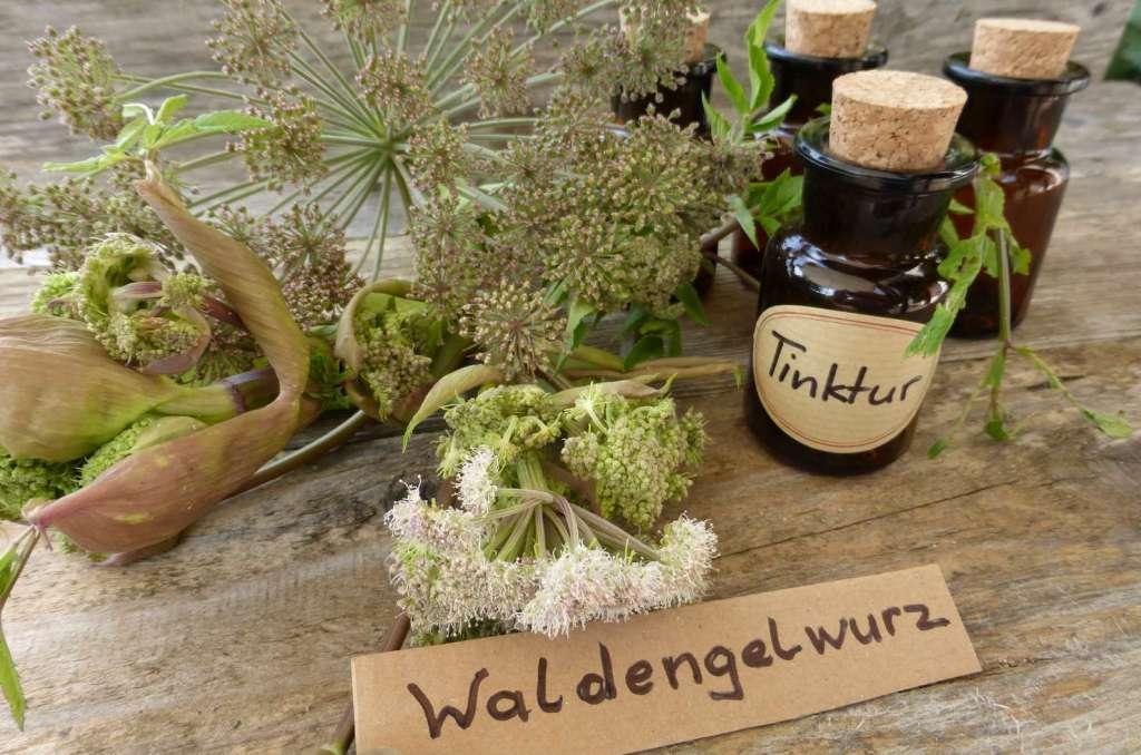 Pflanzentinktur - Heilpraktikerin in Karlsruhe