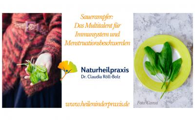 Sauerampfer – Immunsystem und Menstruationsbeschwerden